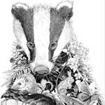 Badger art by wildlife artist Jon Tremaine
